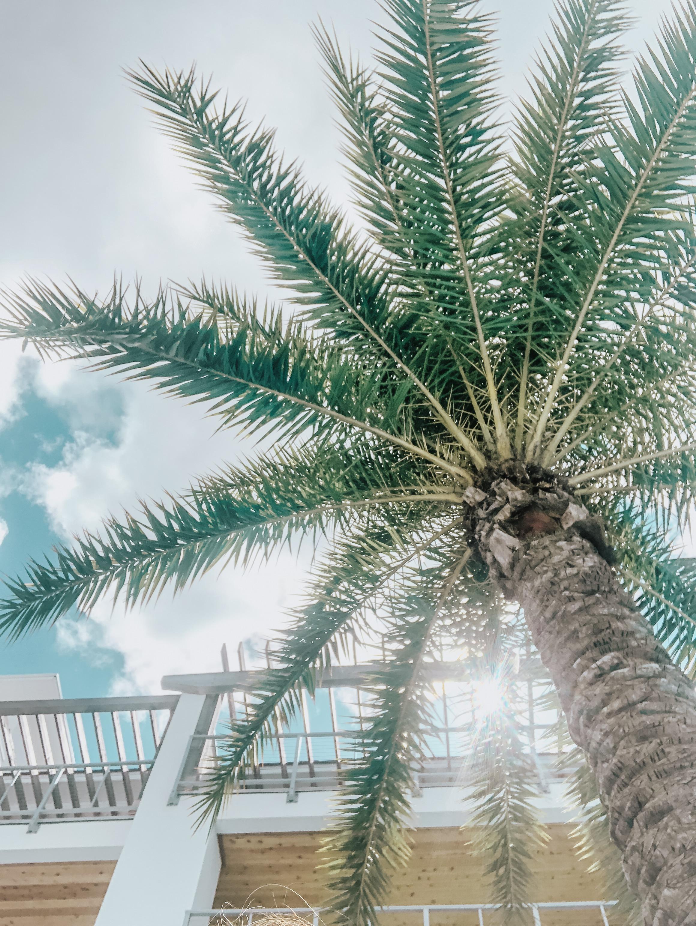 30A Blogger Weekend - Palms